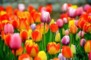 استيراد نباتات من تركيا