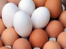 استيراد بيض من تركيا