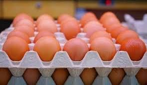 معمل بيض في تركيا