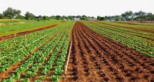 اراضي زراعية للبيع في اسطنبول