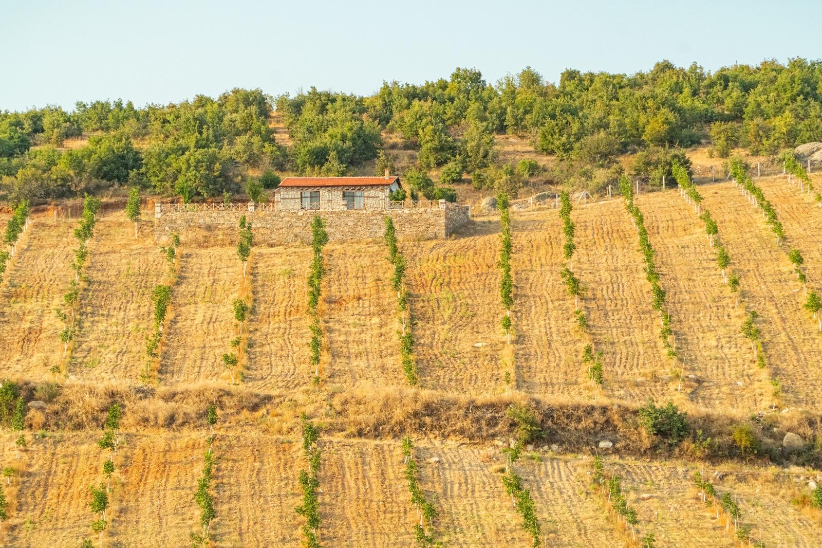 استثمار المزارع في تركيا