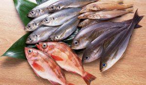استيراد السمك من تركيا