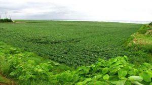 افضل مشروع زراعي في تركيا