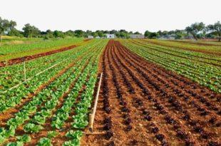 بيع اراضي في طرابزون
