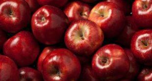 تصدير التفاح من تركيا .. 7 مؤسسات تخدمك في إجراءات مشروعك