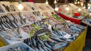 شركات الصيد في تركيا