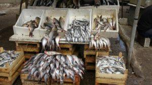 مزارع السمك في تركيا