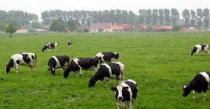دراسة جدوى مزرعة ابقار في تركيا.
