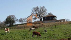 مزارع تسمين العجول في تركيا