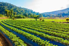 مشروع زراعي في تركيا